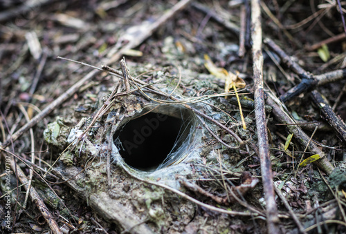 Hole or the nest of Thailand black tarantura (Haplopelma Minax) in the forest Canvas Print