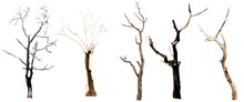 Set Of Trees Without Leaves Is...