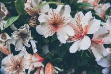 2019 Exotic Flowers White Vint...