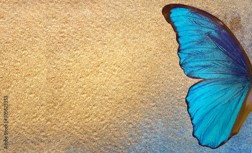 Foto auf Leinwand Schmetterlinge im Grunge Bright blue wings of a tropical morpho butterfly on a gold background. Blue and golden texture background. Blue and gold colored paper. copy spaces