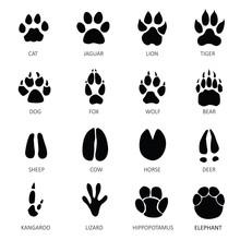 Animals Footprints.