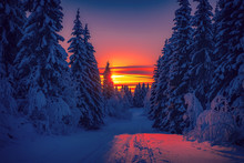 Cold Winter Day Sunset Landscape With Snowy Trees. Photo From Sotkamo, Finland. Background Heavy Snow View.