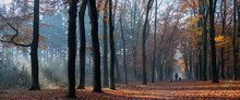 Mother And Child Walk The Dog In Autumnal Forest Near Zeist In The Netherlands
