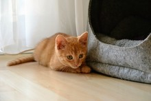 Cute, Little Ginger Red Baby C...