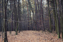 Autumn, A Beautiful Road In Th...