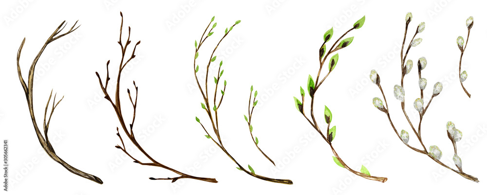 Fototapeta Watercolor tree branch with green leaves, pussy willow. For Spring Easter wreath, frame maiking Hand drawn illustration. Isolated design element for invitations, poster, greeting card concept.