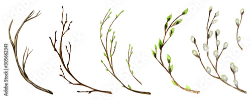 Foto Watercolor tree branch with green leaves, pussy willow