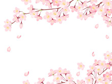 "Frame Of ""Sakura"" Cherry Blossoms/Spring Flower Of Japan /white Background"