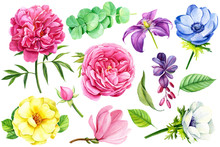 Beautiful Set Of Flowers, Wate...