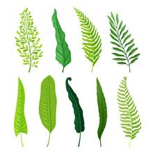 Ferns Set. Botanical Detailed ...