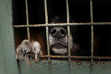 Fototapeta Zwierzęta - dog nose and paw in an animal shelter cage