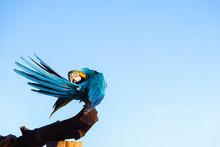 Blue Yellow Macaw Parrot Bird ...