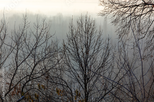 Fotobehang Vrouw gezicht Bare tree branches in the fog at dawn