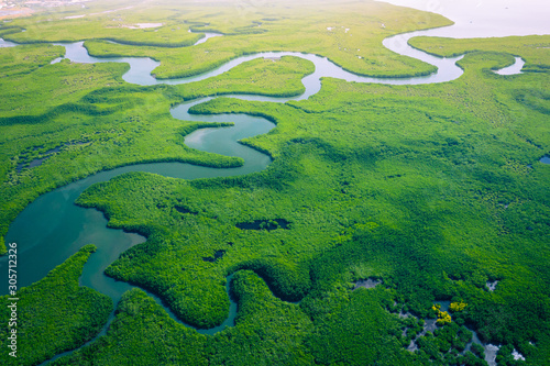 Gambia Mangroves. Aerial view of mangrove forest in Gambia. Photo made by drone from above. Africa Natural Landscape. - 305712326
