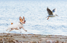 Naughty Dog Chasing Gull Bird ...