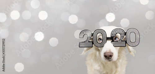 dog looks a goat celebrating chinese new year 2020 Canvas Print