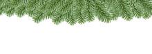 Christmas Evergreen Fir Tree B...