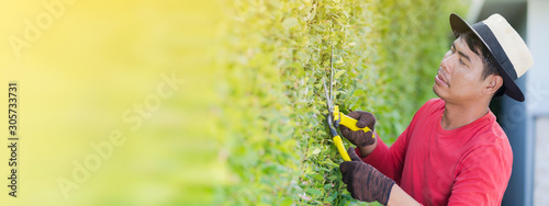 Foto auf Leinwand Gelb Schwefelsäure Man working in garden is pruning of ornamental trees at home in morning