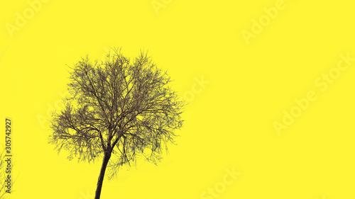 Foto auf Leinwand Gelb tree