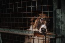 Sad Dog Posing Behind Bars In An Animal Shelter