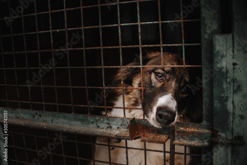 sad dog posing behind bars in an animal shelter Wallpaper Mural