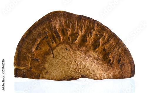 Dry tree mushroom Fototapet