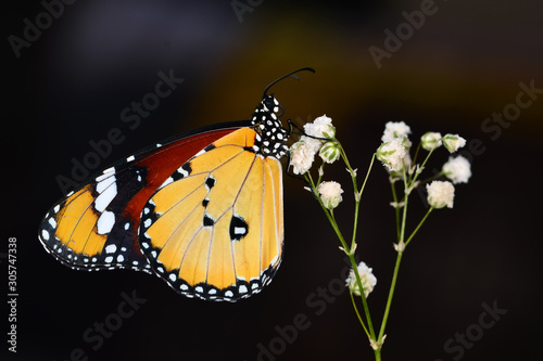 Foto op Aluminium Vlinder Closeup beautiful butterfly in a summer garden