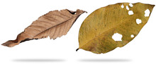 Dry Leaf Dead In Winter Isolat...