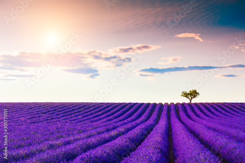 Lavender fields with heart-shape tree near Valensole, Provence, France. Beaut...