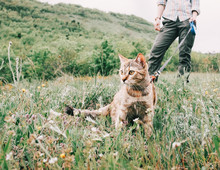 Woman Walking With Curious Red Cat On A Leash On Nature.