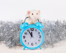 Cute White Rat Standing Behind A Clock Showing Almost Midnight As A Symbol Of The 2020 New Year Of The White Metal Rat