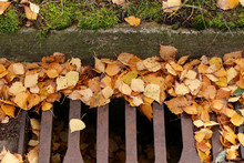 Yellow Autumn Leaves Blocked W...
