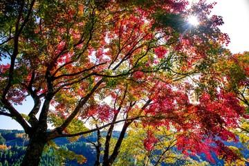 Panel Szklany Drzewa 岡城の紅葉