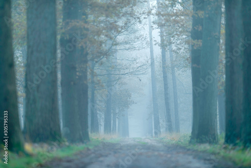 Dirt road in foggy forest during autumn.