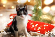 Kitty Cat And Festive Christmas Decoration