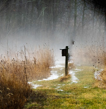 Field & Fog
