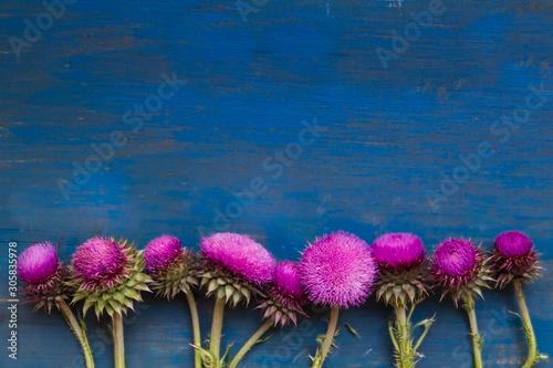 Fototapeta decorative border with thistle flowers on blue rustic wood