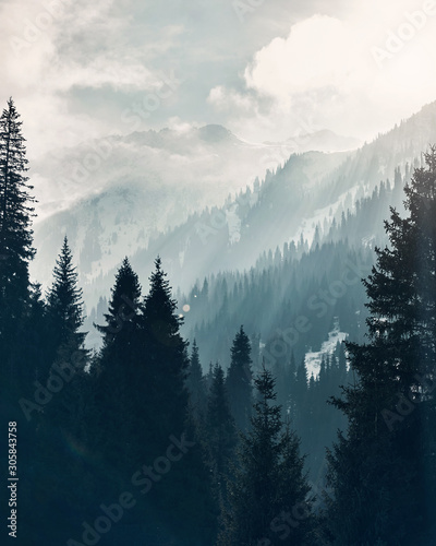 Mountain forest at fog sunrise background Fototapete