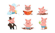 Funny Pigs Characters Sleeping...