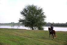 Back Of The Man Driving Horse Towards The Tree Near The Lake