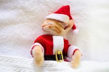 Baby Cat In Christmas Santa Ha...