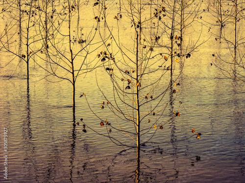 Alluvione Pò Ponte della Becca  2019 Canvas Print