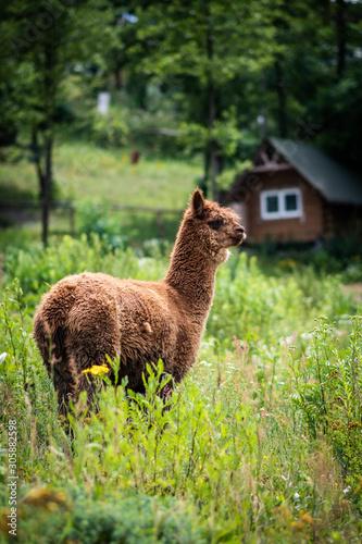 zwierzęta domowe na pastwisku