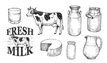 Milk And Dairy Products. Fresh Farm Milk, Cheese, Cottage Cheese. Hand Drawn Illustration Converted To Vector. Isolated On White Background