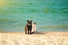 A Dog And A Cat On The Beach A...