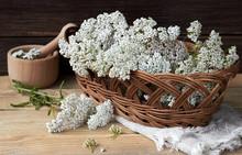 Yarrow Wild Field Herb In The ...