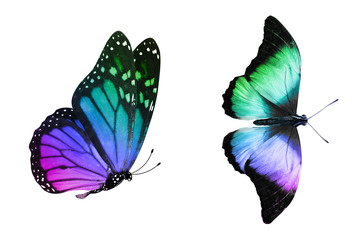 tropical butterfly with gradient coloring isolated on a white background