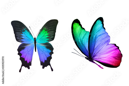 tropical butterfly with gradient coloring isolated on a white background - 305923970