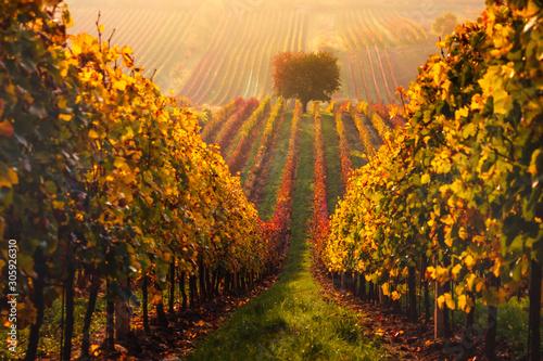 Montage in der Fensternische Honig Autumn in Moravian vineyards near Velke Bilovice in Czech Republic