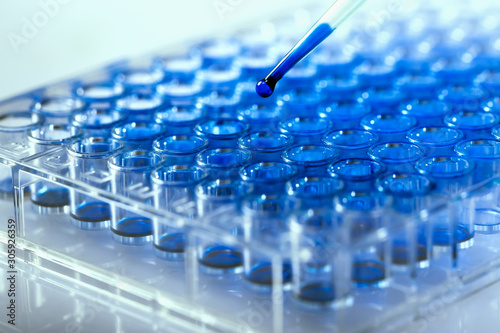 Researcher pipetting samples of liquids in microplate for biomedical research / Scientist holding 96 well plate with samples for biological analysis